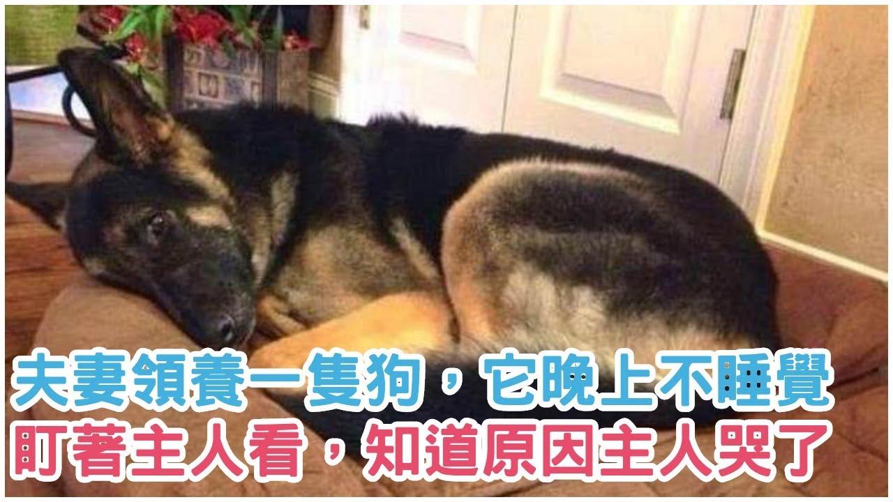 夫妻領養一隻狗,它晚上不睡覺,盯著主人看,知道原因後主人哭了